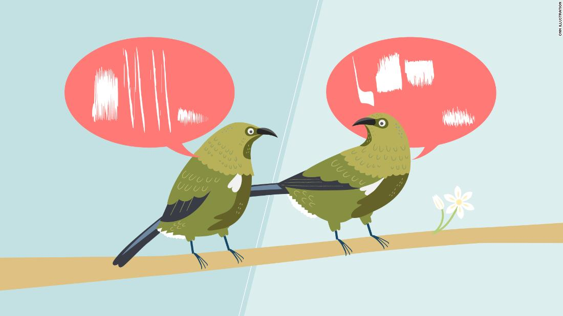 Photo of Not all birds sing the same song. They also have dialects