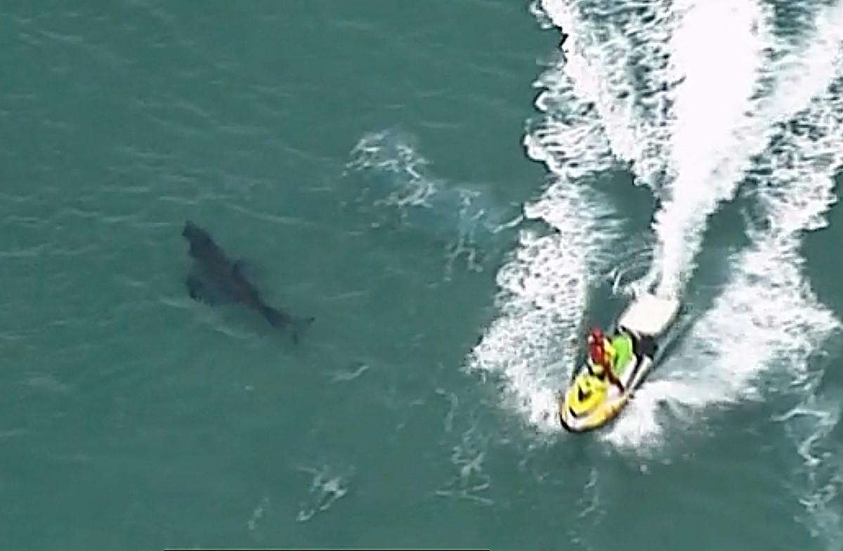 Surfer killed in Australia by 10-meter great white shark